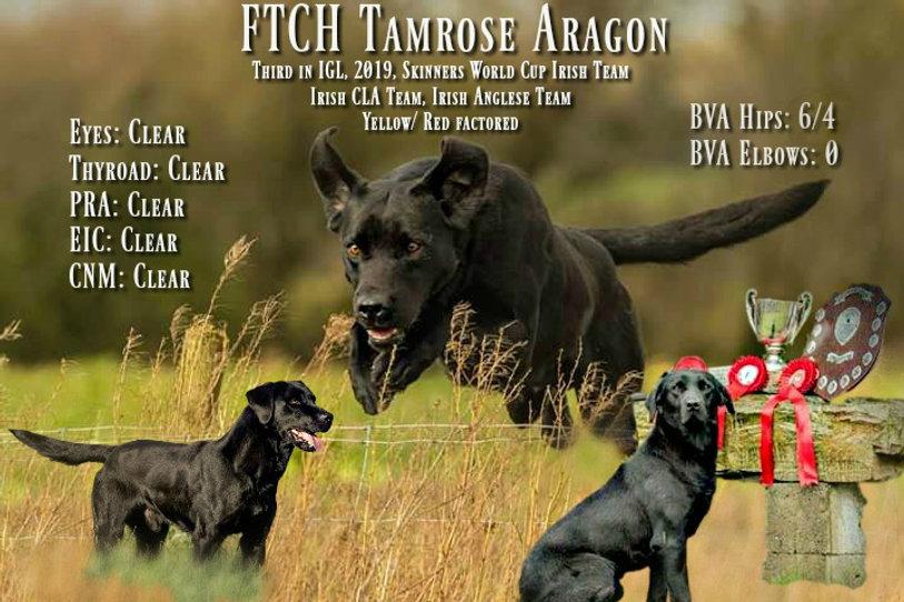 Tamrose Aragon Stud Ad.jpg