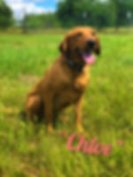 Chloe.2.jpg