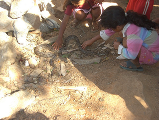 A POOR GIRL TRYING TO CATCH A SNAKE TO EAT