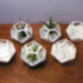 plantygon2.jpg