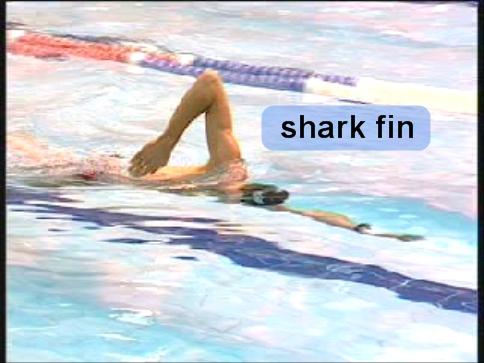 Shark Fin 1 (side)-annot