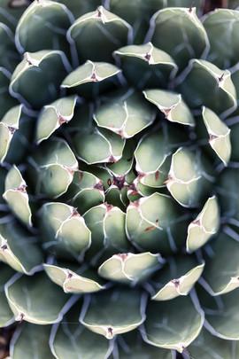 01_Cactus.JPG