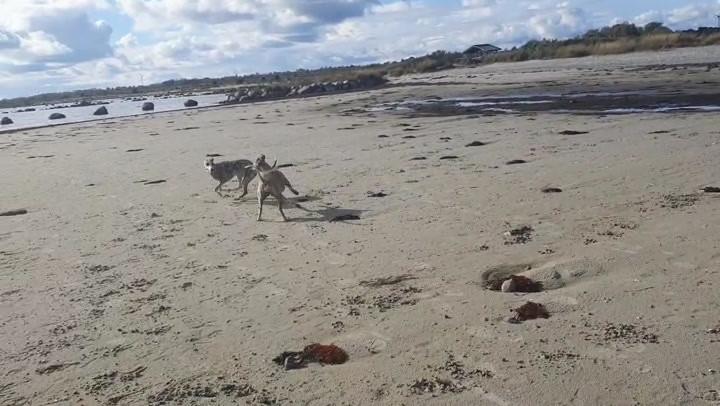 Röja och Oddi leker på Öland