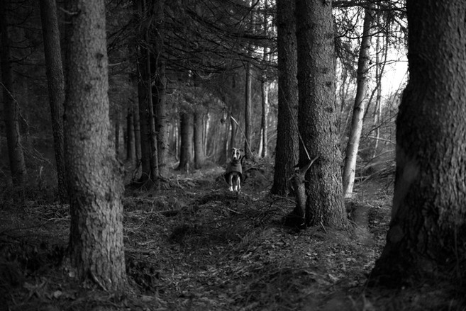Röja in the woods