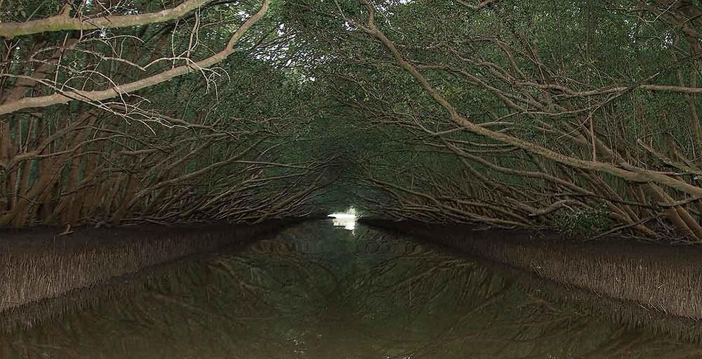 Mangroves in Richards Bay
