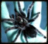 Peur des araignées - phobie