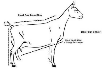 Conformation- Ideal Side View.jpg