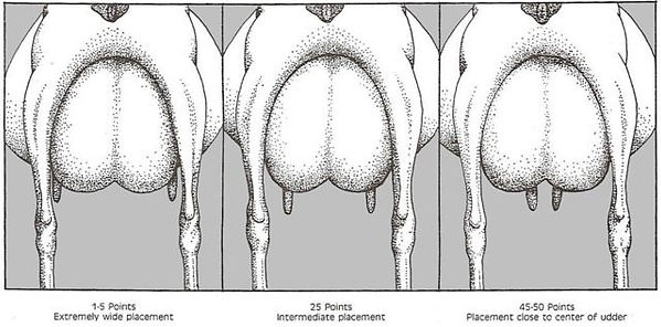 Teat Placement Rear View.jpg