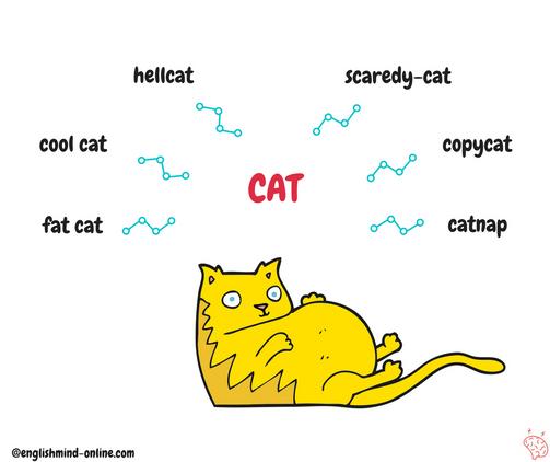 English collocations - cat.