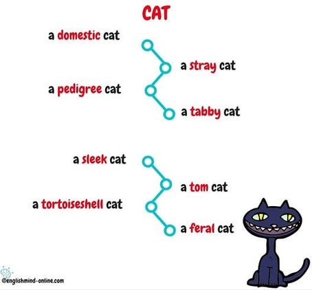 🌀Learn English Visually - vocabulary
