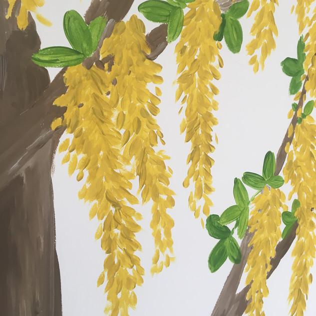 Golden chain tree flowers