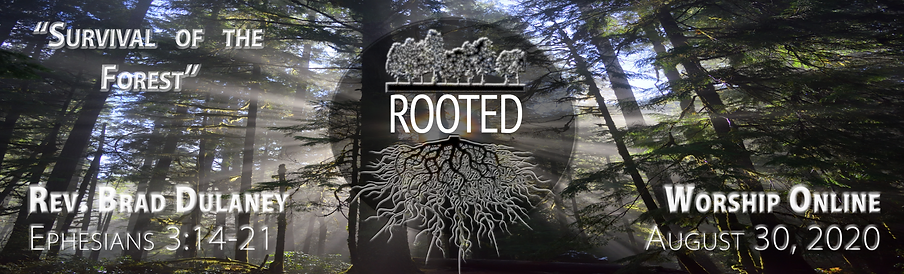 8.30 Rooted Header for Worship graphic.p