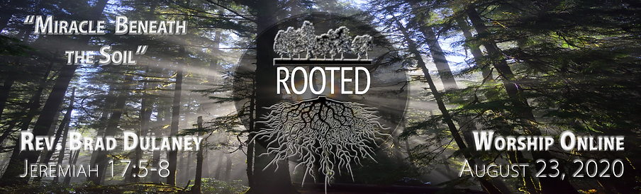 8.23 Rooted 3 graphic for Worship Page.p