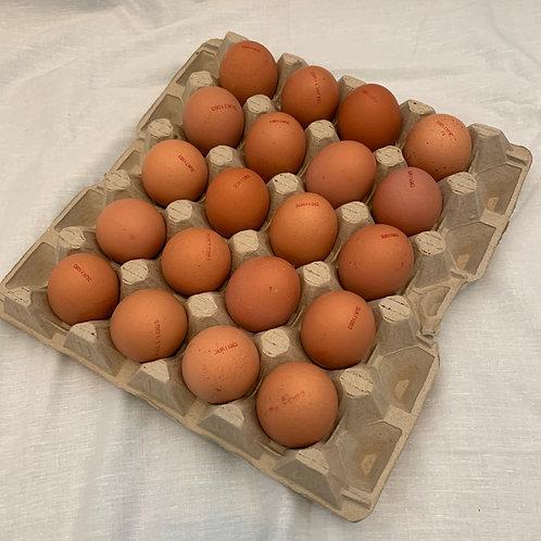20 Large Eggs