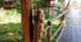 prego macaco