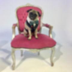 Doug_Therapy_Dog_Social_Pug_Profile_The_
