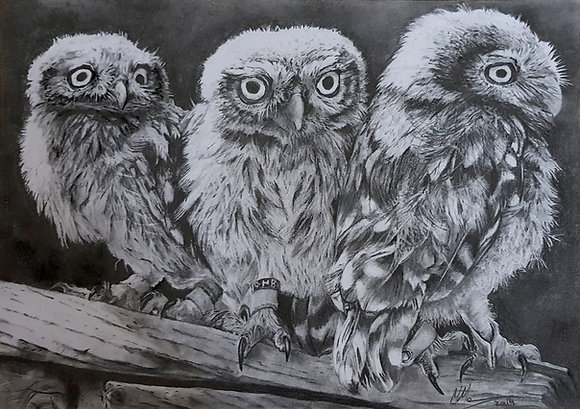'Triplets'