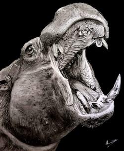 Hippo-Original-AEW.jpg