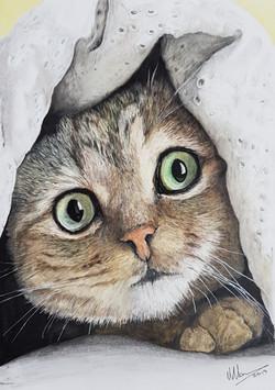 Cat1 - Original - sold.jpg