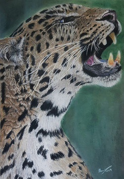 Chinese Leopard