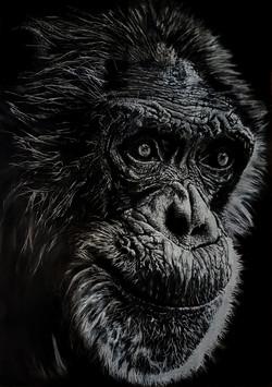 Chimp1 - Original.jpg