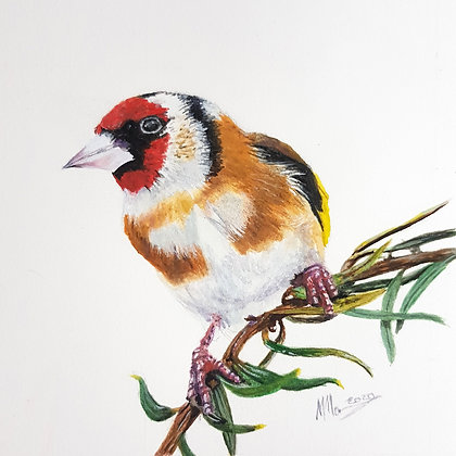 'Goldfinch'