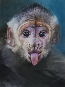 Monkey-PF-Original.jpg
