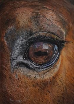 Horse3 - Original.jpg
