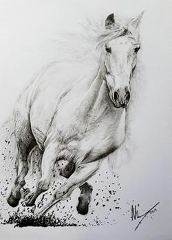 Horse2 - Original.jpg