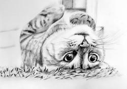 Cat2 - Original.jpg