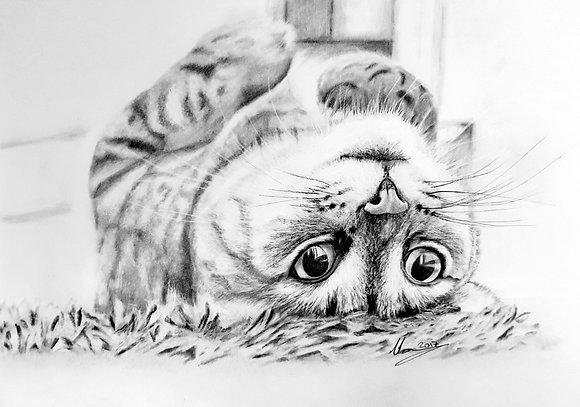 'Lazy Cat'