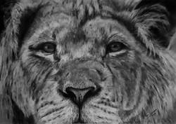 Lion1-KM - Original.jpg