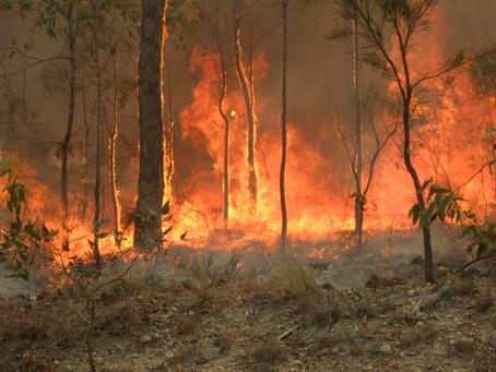 Les conséquences 1 an après les terribles incendies en Australie en 2019