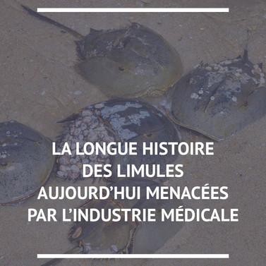 Limule