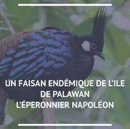 Eperonnier Napoléon
