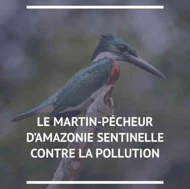 Martin pécheur