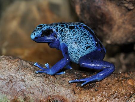 Comprendre l'évolution : l'exemple du mimétisme chez les amphibiens