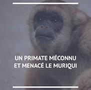 Muriqui