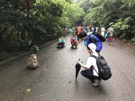 Yuji Akaoka nous parle des macaques japonais