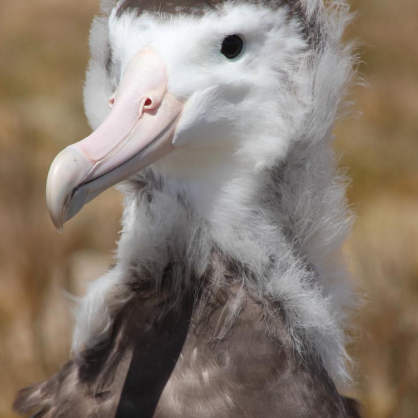 Albatros d'Amsterdam