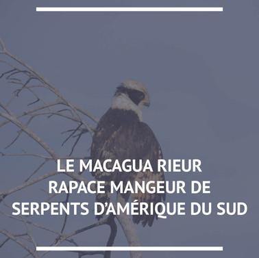 Macagua