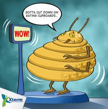 cupboard termite.jpg
