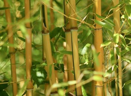 Écologie : on oublie le plastique et on fonce acheter du bambou !