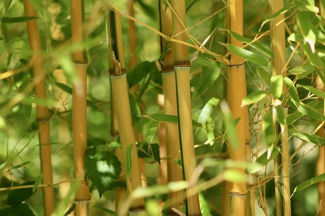 Le bambou : une alternative au plastique