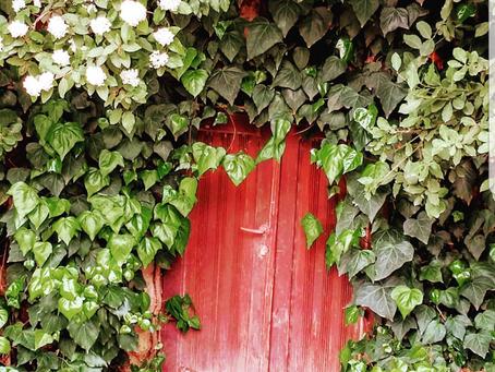 דלת קסמים