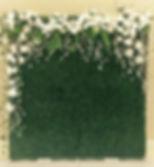 Boxwood Hedge Backdrop $100