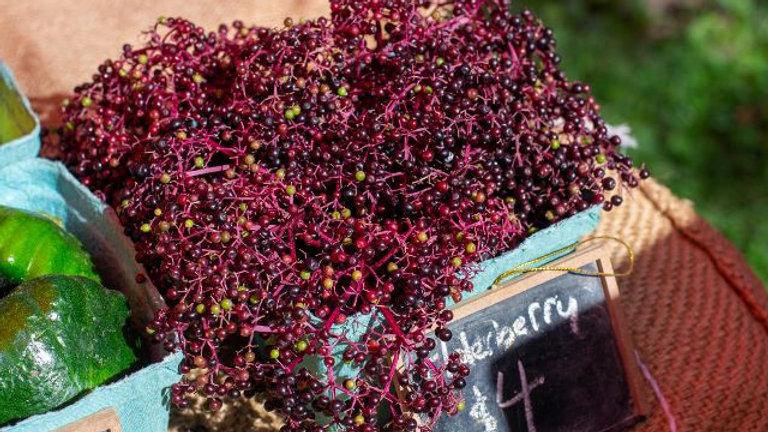 Elderberry - What is it? Should I use it?