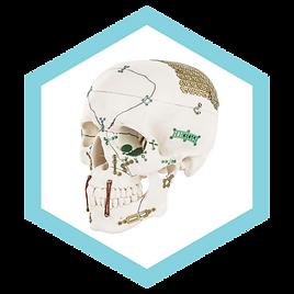 ANTON HIPP Skull.png
