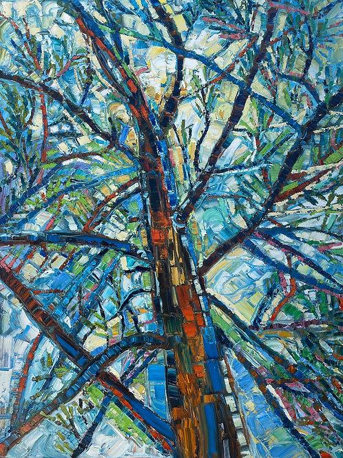 Light Through the Old Pine