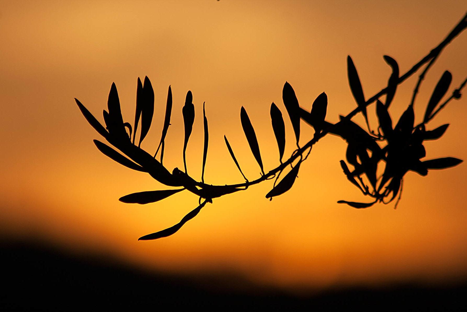 Sul far del tramonto